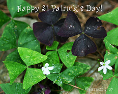 Happy St Patrick's Day Photo By Artsi~Annie