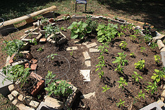 Our organic Garden at the studio - May 1st Photo by Just in Parr