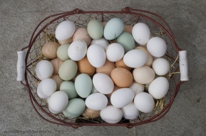 Eggs of Many Colors Photo By woodleywonderworks