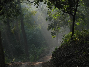 Corbett national park forest Photo by netlancer2006