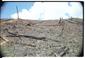 Deforestation - Backcountry Mad-7256-22A Photo By World Resources Institute Staff