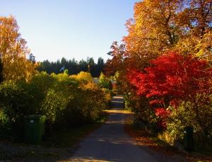 Autumn Colors Photo By Per Ola Wiberg