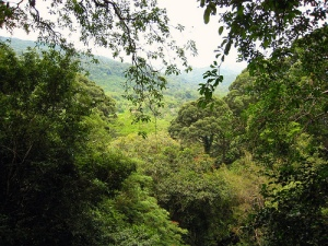 View through Borneo rainforest Photo By doug88888