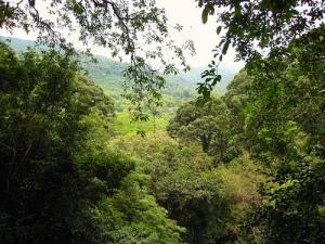 View through Borneo rainforest Photo By doug88888