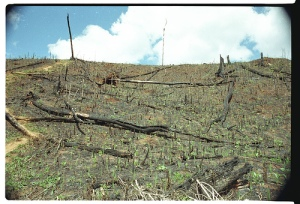 Deforestation - Backcountry Mad-7256-21A Photo By World Resources Institute Staff