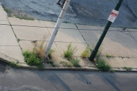 Weeds on a Philly Sidewalk Photo By Eric__I_E